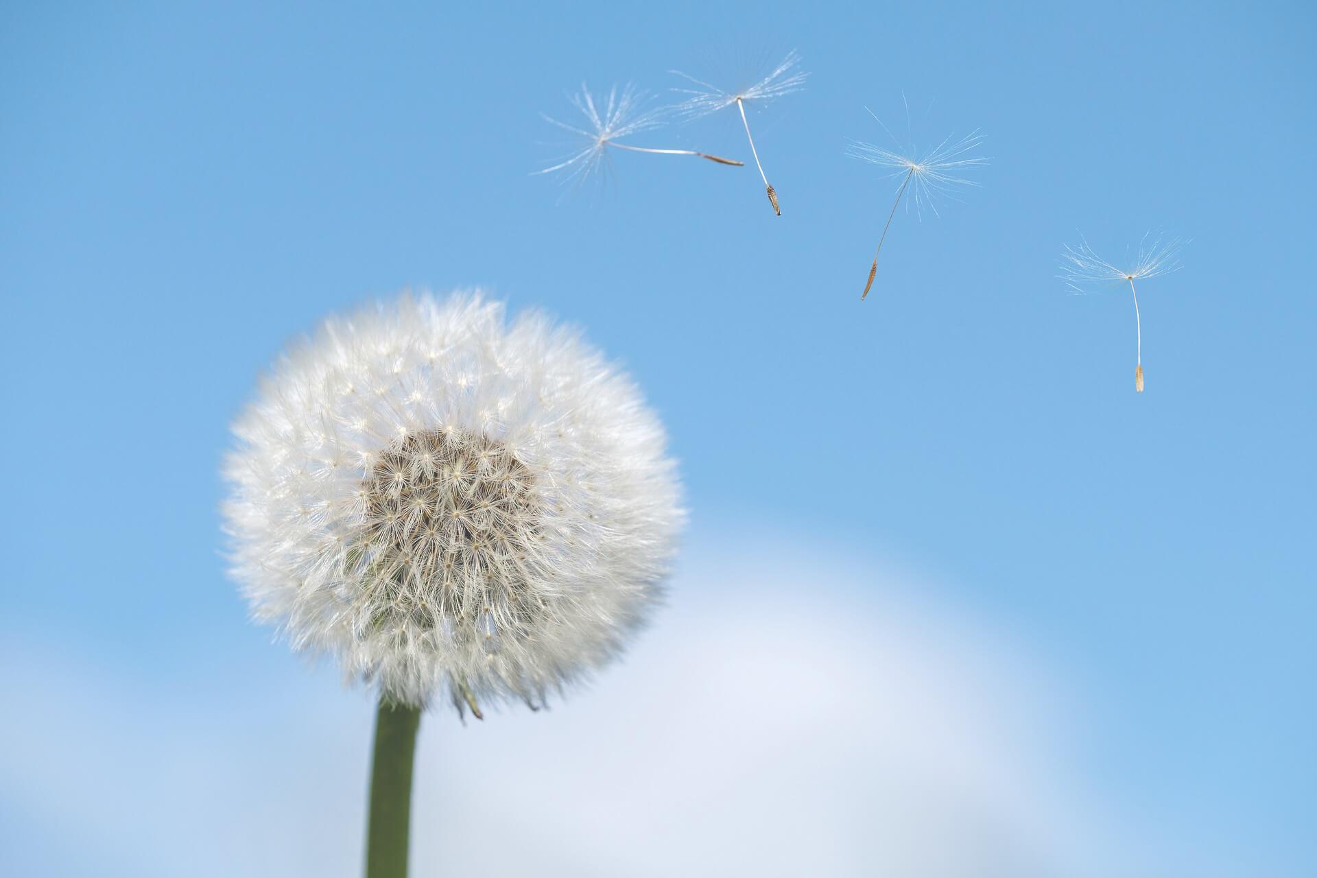 Alergias y seguros de salud